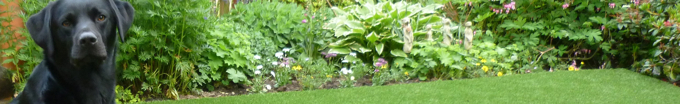 Lawn Turf Edinburgh Artificial Grass Edinburgh