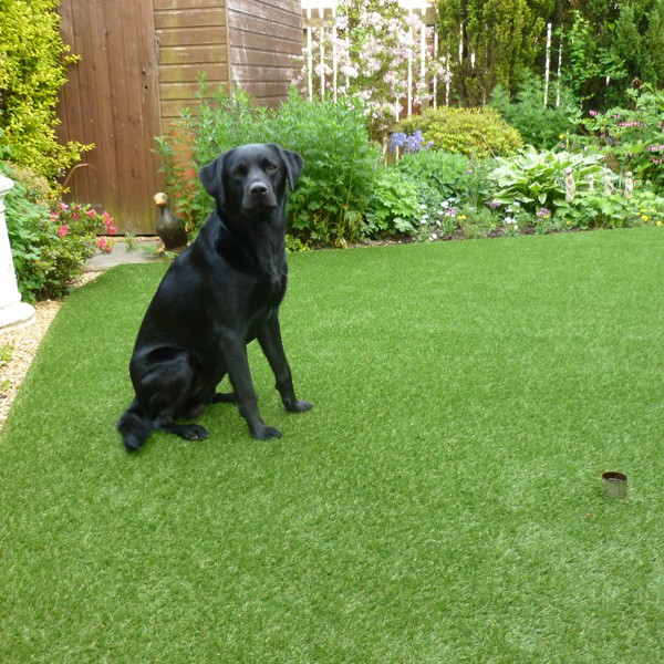 Pet-Friendly Artificial Grass