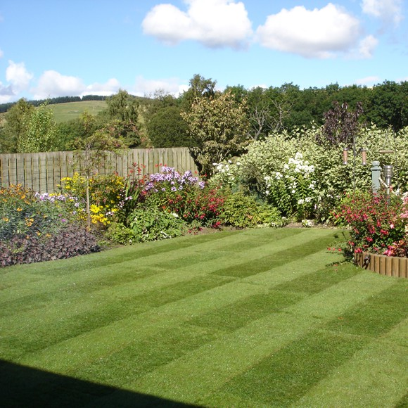 Lawn Turf Lawns