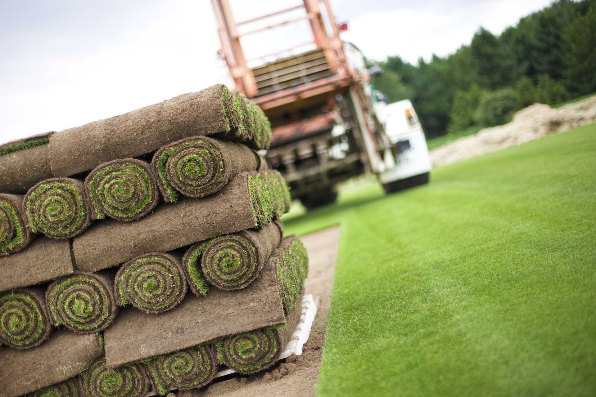 Why Choose Our Lawn Turf?