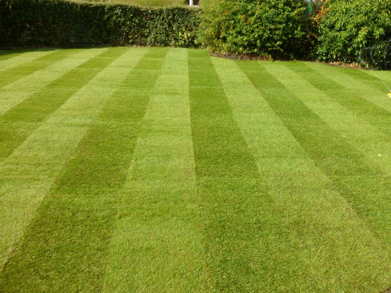 How Do You Identify Quality Lawn Turf?