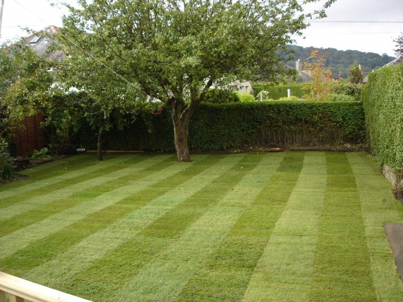 Garden Guide: Mow Your Lawn Like An Expert
