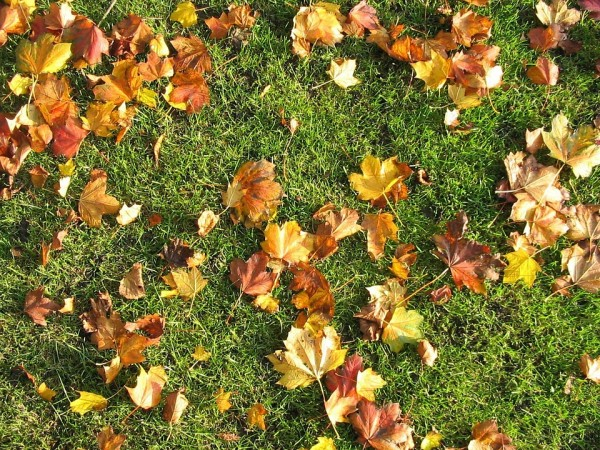 Lawn Care In Autumn